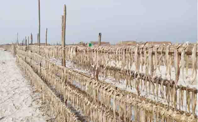 সুন্দরবনের দুবলার চরে শুরু হচ্ছে শুটকির মৌসুম