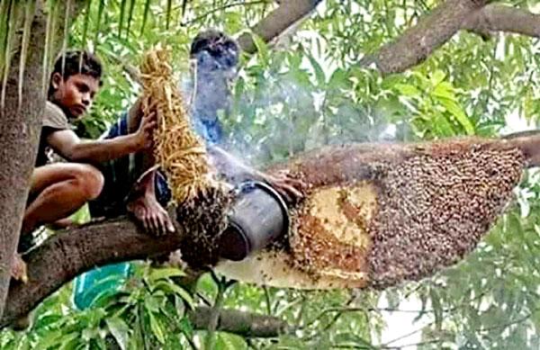 পূর্ব সুন্দরবনে মধু উৎকোচ না পেয়ে মৌয়ালদের আটক করে নির্যাতন করেছে বনরক্ষীরা